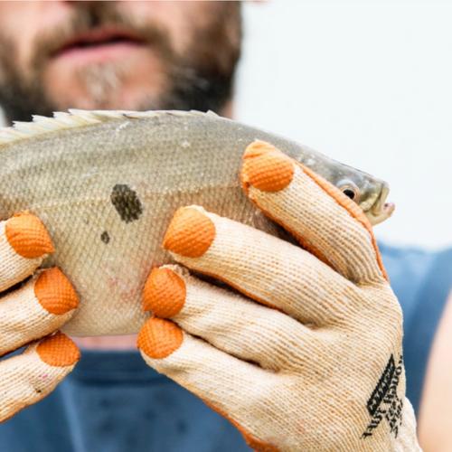 Is Omegabaars de meest duurzame vis ooit?